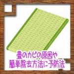 畳のカビの原因や簡単除去方法に予防法!結露との関係性は?