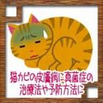 猫カビの皮膚病に真菌症の治療法や予防方法について