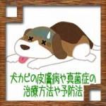 犬カビの病気で皮膚病や真菌症の治療方法や予防法について