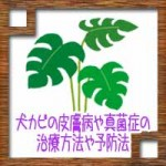 観葉植物の土に白カビ!原因や防カビ対策に対処法について